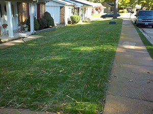 My Zoysiagrass Lawn Was Beautiful Now What Should I Do