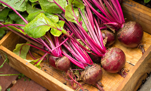 Beet Vegetable with an Image Problem Missouri Environment and