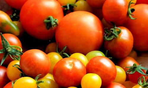Fertilizing Tomatoes for Delicious Fruits // Missouri Environment