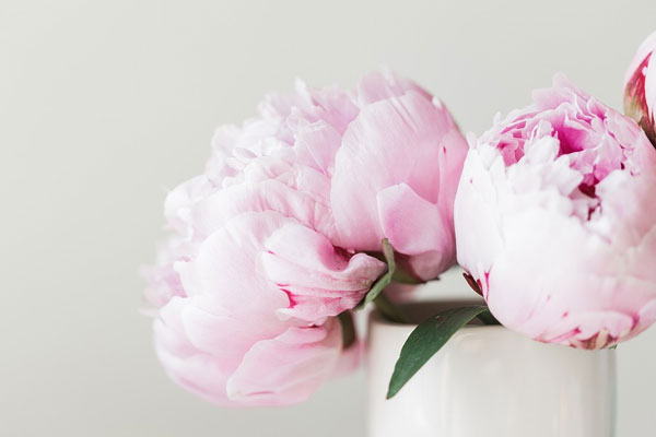 Plant Peonies In September Missouri Environment And Garden News