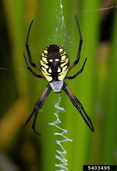 Common Spiders of Missouri: Identification, Benefits, and