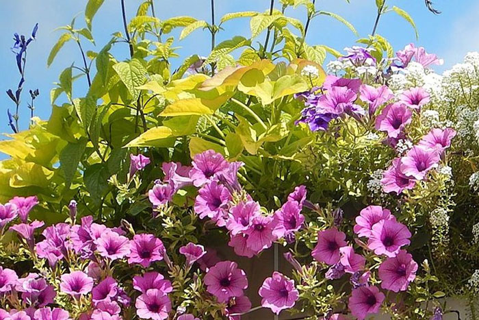 New Annual Bedding Plants For 2021, Bedding Plant Pink Flower