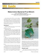 IPM1011: Watermelon Bacterial Fruit Blotch