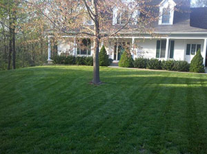 Fall Maintenance For A Healthy Lawn Missouri